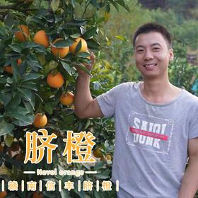 【预售】华农兄弟赣南脐橙江西脐橙现摘现发 10斤装