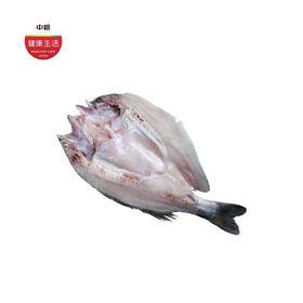 优选新品|白蕉 海鲈鱼 400-500克/条