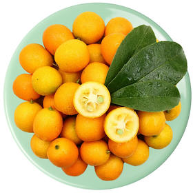 【甜过初恋】金桔 香雾噀人惊半破  清泉流齿怯初尝 小橘子 小桔子