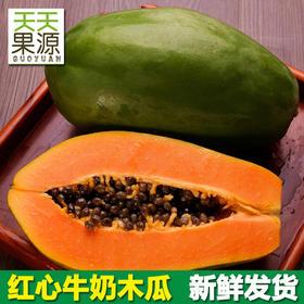 新鲜水果木瓜 海南原产地红心牛奶木瓜果实硕大现摘现发味甜多汁