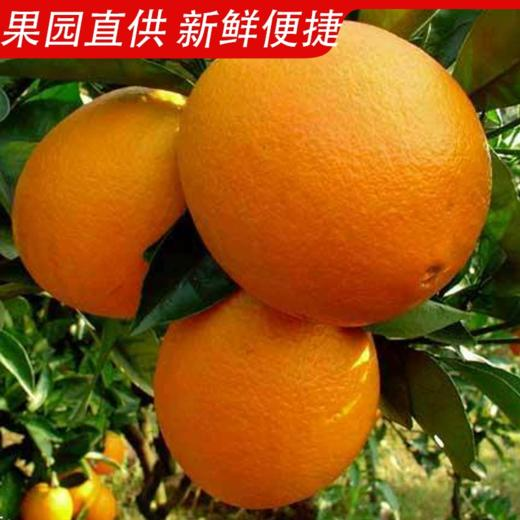 【新鲜脐橙】江西赣州  赣南脐橙8斤装 新鲜当季甜橙赣南脐橙 商品图3