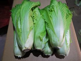 小个儿白菜 包心不大 常温不耐储存 建议适量购买 自然农耕八年  纯素种植