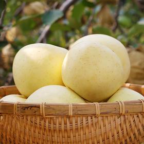 【顺丰包邮】山东烟台黄金奶油富士苹果5斤