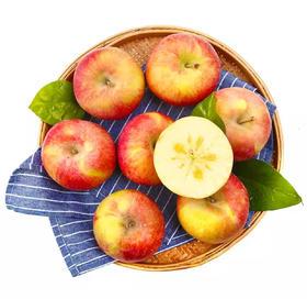 【一件代发】新疆阿克苏苹果  9斤±5两/箱