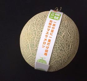 【蜜瓜中的LV,日本卖4000元一个】一级原生态海南玫珑网纹蜜瓜,日本品种蜜汁软心,甜度高达19°,80%都是水分!