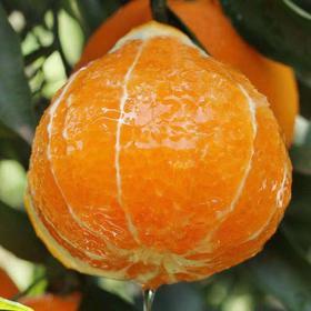 爱媛38号果冻橙5斤桔子柑橘子水果新鲜当季水果橙子水果