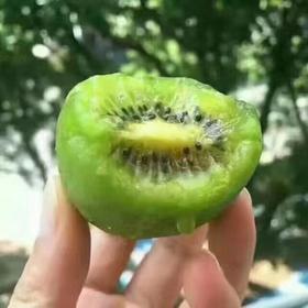 陕西周至海沃德猕猴桃|个头饱满 果实均匀|大果80-150克/个5-8斤装【严选X水果蔬菜】
