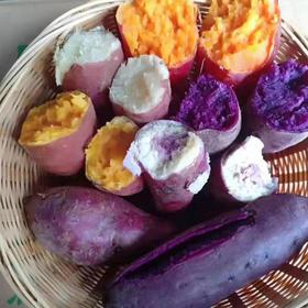 五色番薯组合(紫罗兰紫薯,板栗香薯,西瓜红蜜薯,蛋黄薯,一点红冰激凌薯)|5-8斤装【严选X水果蔬菜】