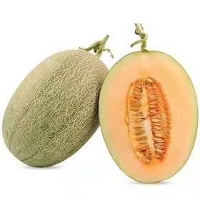 海南西州蜜瓜25号甜瓜果网纹瓜|脆甜可口,爽嫩细滑|5.5-9斤装【严选X水果蔬菜】