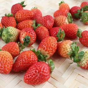【精选】大凉山德昌露天草莓|汁水丰盈 甜如初恋 美似红颜|3斤礼盒装约60-70个左右【水果蔬菜】