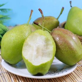 【预售】红香酥梨 不只是好吃 脆甜多汁 净重8斤装包邮