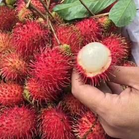 【精选年货】越南红毛丹毛荔枝|果肉细腻多汁味酸甜含有丰富的营养|【水果蔬菜】