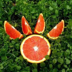 【精选】万州中华红血橙|果肉饱满 口感清甜 自然醇美|5-8斤装【水果蔬菜】