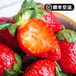 大凉山奶油草莓 鲜甜肉滑 肉厚多汁 饱满果型 产地现摘新鲜直达 顺丰空运2-4斤装