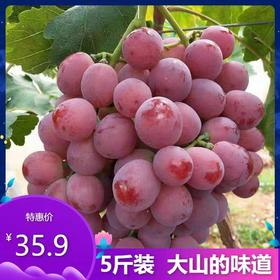 山东红提提子葡萄5斤装现摘现发应季孕妇新鲜水果