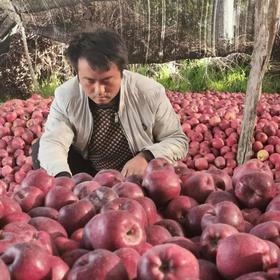 甘肃花牛蛇果红苹果10斤 清甜可口 健康美味 富含人体所需微量元素