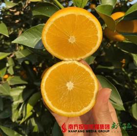 【一件代发】永兴冰糖橙 6斤±1两  3斤/袋   2袋/箱