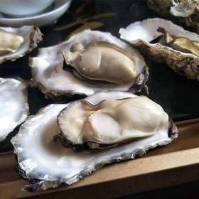 【肥美生蚝】乳山牡蛎 鲜活现捞 肥度高、肉质好、味道鲜 随箱赠送开蚝工具 5斤/箱