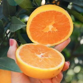 九月红秋橙 果重9斤【三峡特产】秭归秋橙九月红!橙香满溢!汁多甘甜!口感鲜嫩!绿色有机