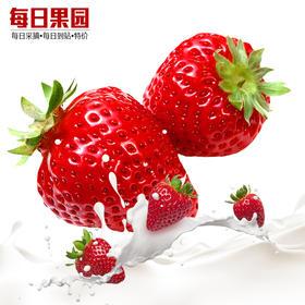 特级甜查理草莓 精选900g装 新鲜水果-835033