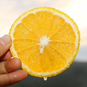 水润多汁的闽北甜桔柚 果嫩饱满 肉紧清甜 柚香浓郁 产地现摘新鲜直达 5斤装