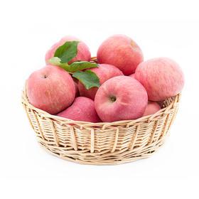 山东烟台水晶富士苹果2.5kg