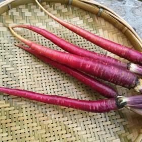 云南大理紫胡萝卜,紫玉萝紫云萝,洱海边出产,富含维生素C、胡萝卜素、花青素