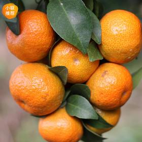【推荐】广西贺州砂糖橘净果5斤/9斤(一级果)(润典)