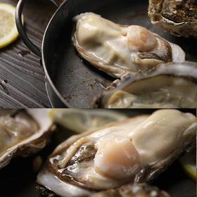 【精选】海阳蚝 山东乳山生蚝牡蛎单体1-4两|可以生吃的新鲜牡蛎|5斤装M-XL【生鲜熟食】