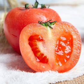 预售2月24日发货 | 鲜甜粉砂的山东西红柿 肉质厚实 晶莹鲜嫩 汁多爽口 产地采摘新鲜直达 4.5斤装