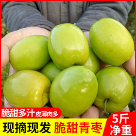 云南特产元江青枣 果皮鲜绿 果肉雪白 口感甜脆 5斤装