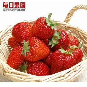 优级红颜草莓 精选500g装 牛奶草莓 新鲜奶油草莓-835031