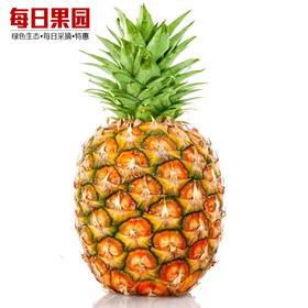 优级海南菠萝 2.9元/斤特惠 精选4斤装 海南热带时令水果菠萝-864815