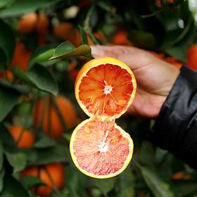 【预售到2月20号发货】鲜嫩汁多的四川资中塔罗科血橙 果肉饱满 细嫩化渣 橙香四溢 5/9斤装