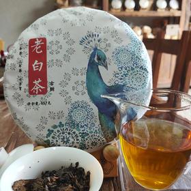 古树老白茶