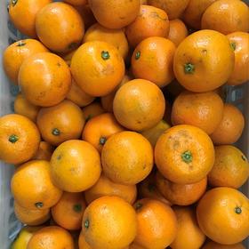 【年后发货】9斤大果黑丑冰糖橙特价内部供应 仅限老客户自己食用,不能送人 不售后