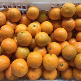 【年后发货】9斤中果黑丑冰糖橙特价内部供应 仅限老客户自己食用,不能送人 不售后