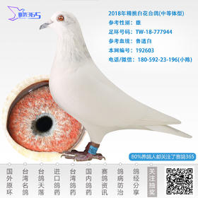 2018年精挑白花台鸽-雄-编号192603