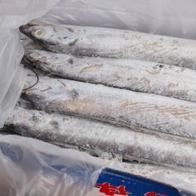 【刀鱼】舟山彩箱型号8-10深海刀鱼带鱼8斤左右+250积分