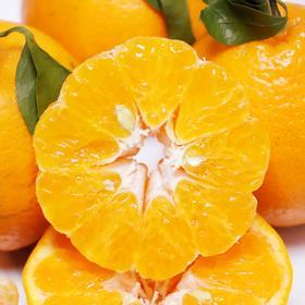 农道大叔精选 | 春见耙耙柑 肉质脆嫩 多汁 清甜 现摘生鲜水果
