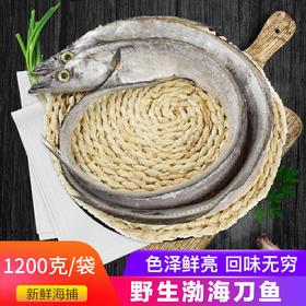 渤海刀鱼1200g