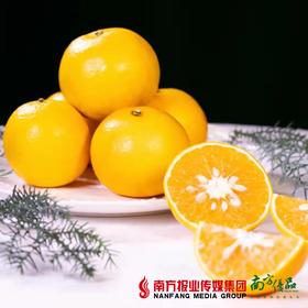 【一件代发】丰诚上品 广西红江橙  10斤±2两/箱