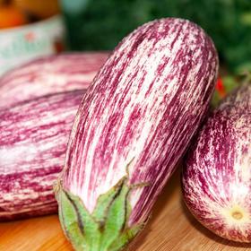 5斤装云南蔬菜花皮茄子 鲜嫩饱满 花色独特 云南特色产地现摘新鲜发货