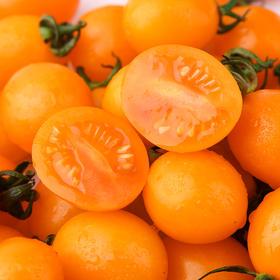 黄金圣女果 农家小番茄 自然成熟脆嫩酸甜 原汁原味吃一口停不下来 5斤装包邮