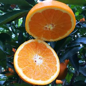 【现可发】重庆奉节脐橙10斤 口碑爆款!甜嫩爆汁、橙味足
