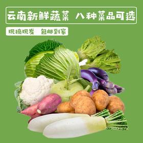 【惠民蔬菜】云南农家自种新鲜蔬菜5斤装包邮(萝卜,青笋,包菜,土豆,苤蓝,茄子,花菜)包售后