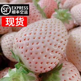 【顺丰现货包邮】淡雪白草莓 果香浓郁 情人节必备 日本品种无农药无化肥 现摘现发