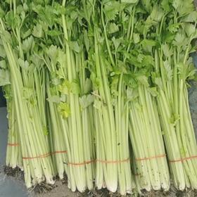 润绿生态园-芹菜  5斤装(每人每天限购5斤,次日发)