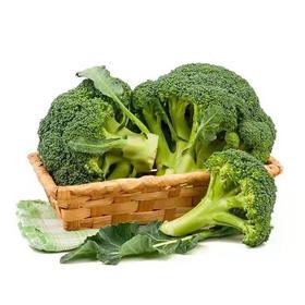 5斤装云南西兰花蔬菜 清脆爽口 农家优质绿色种植