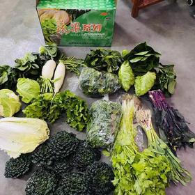 """早晨刚摘的蔬菜,十多个品种,一大箱168元,""""0""""接触囤货【请加文内客服微信购买】"""